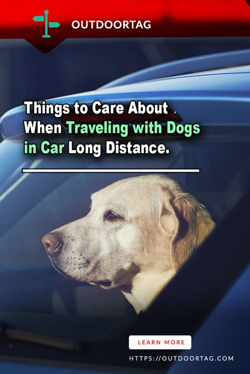 Things to Care About When Traveling with Dogs in Car Long Distance.