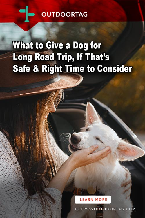 What to Give a Dog for Long Road Trip, If That's Safe & Right Time to Consider.