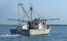 (N.C. Division of Marine Fisheries)