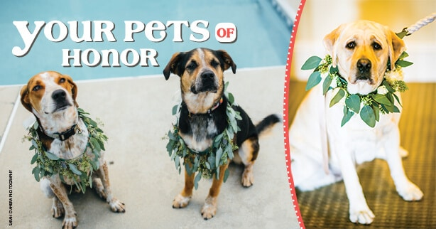 Your Pets of Honor