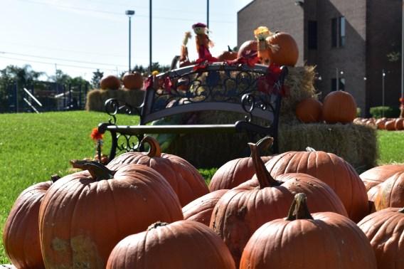 pumpkins-bench