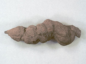 Fossilized feces. Credit: North Dakota Geological Survey