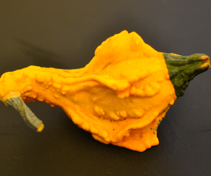 picture of yellow green gourd