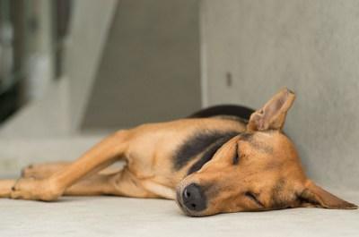 【世界睡眠デー】春の睡眠健康週間!人生の満足度をアップさせるには睡眠が必要不可欠