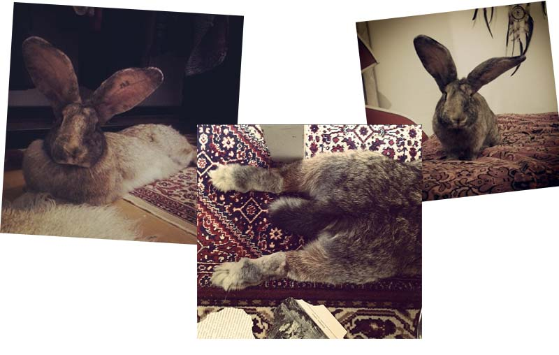 kani-lemmikkinä-andra-3