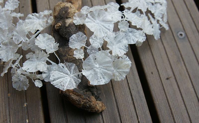 Wiebke Pandikow recycle plastic jewelry art