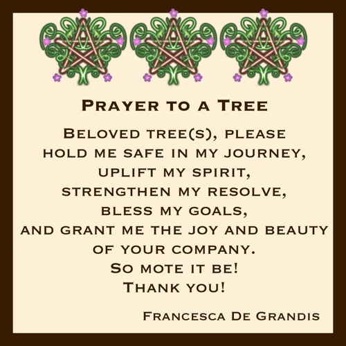 Prayer to a Tree: Beloved tree(s), please hold me safe in my journey, uplift my spirit, strengthen my resolve, bless my goals, and grant me the joy and beauty of your company. So mote it be! Thank you! —Francesca De Grandis