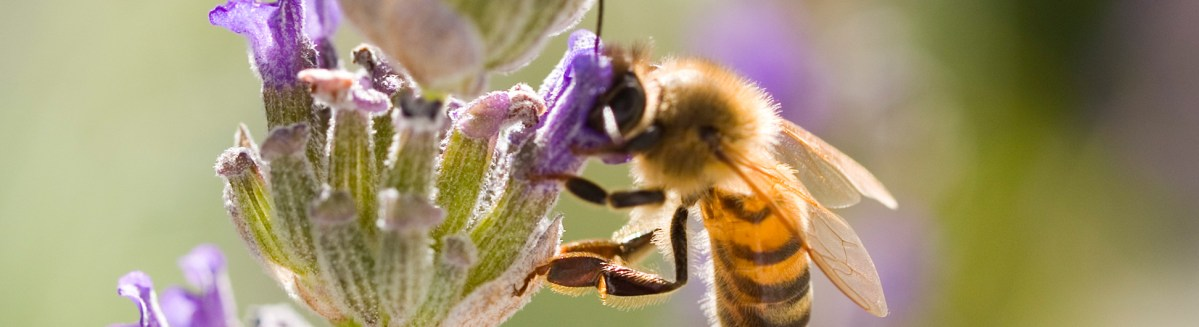 Organocide Rebrands To Highlight Pollinator Safety