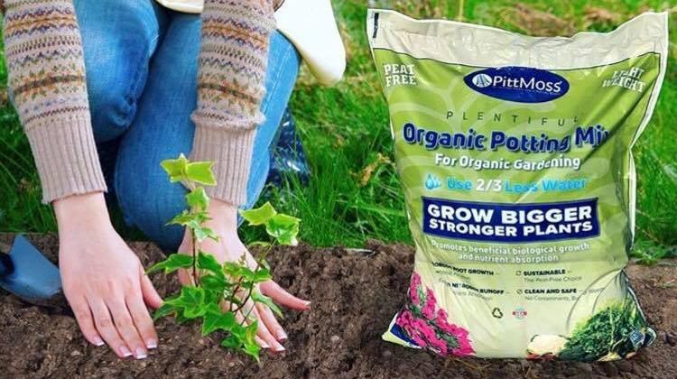 Using PittMoss® To Help Indoor Plants Thrive