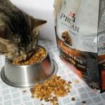 Lasting Bonds & DIY Cat Toy