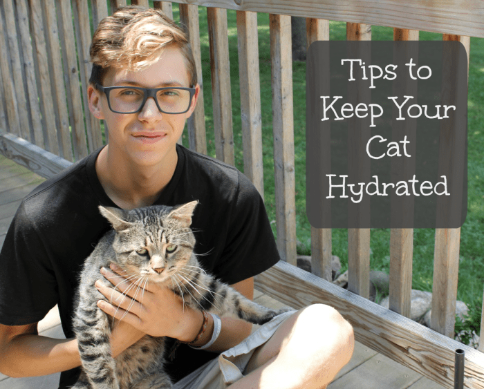 Tips to Keep Your Cat Hydrated