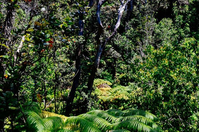 Rainforest Hawaii Big Island Best Things to do