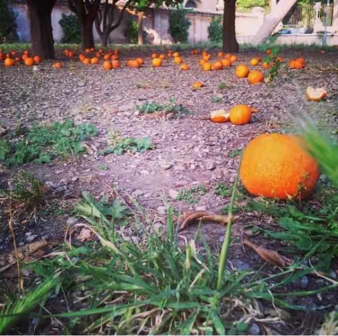 tappeli-di-arance-giardino-degli-aranci