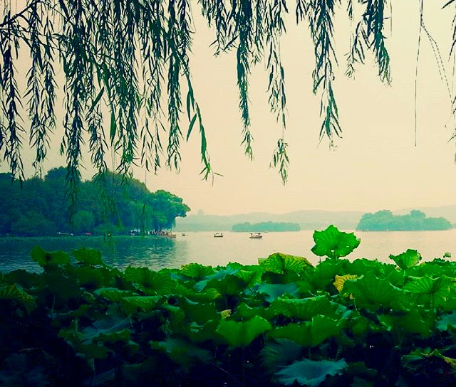 hangzhou-lago-piantagioni-cina