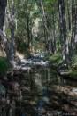 Cyprus Troodos stream