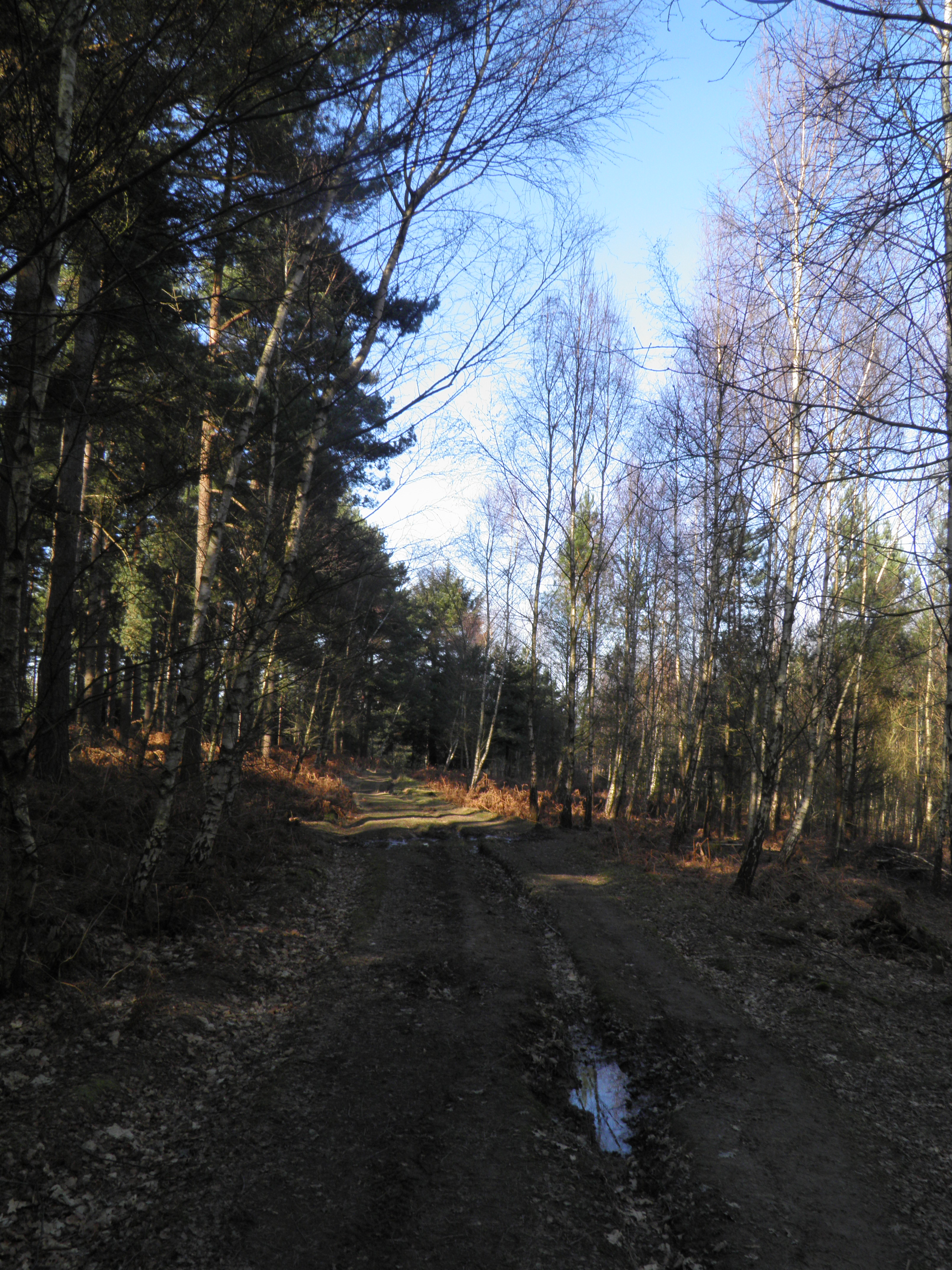 Ashdown Forest and the Five Hundred Acre Wood  Out of the