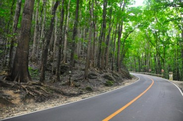 Mahogany Forest in Bohol