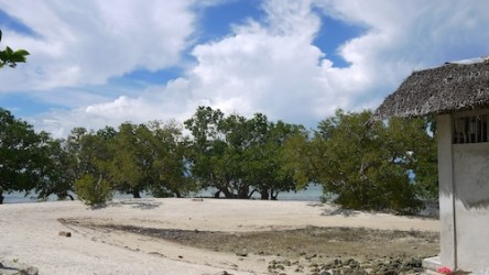Mangrove Area