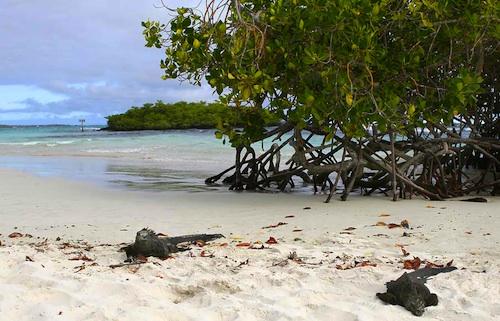 White Sand Beach in Galapagos