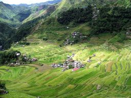 Rice terraces at Cambolo near Banaue
