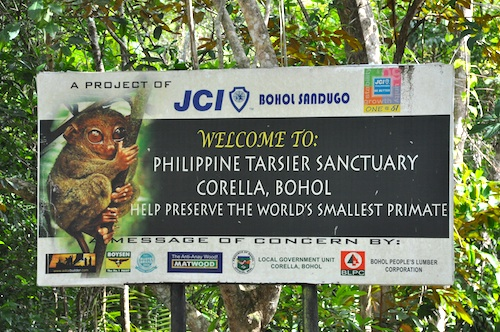 Corella Tarsier Sanctuary Bohol