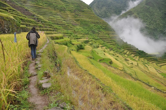 Batad Rice Terraces - A closer look