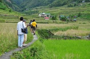 In Hapao Rice Terraces