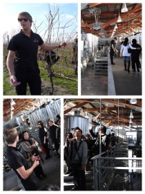 Jackson Triggs Winery Tour
