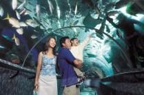 Singapore Underwater World