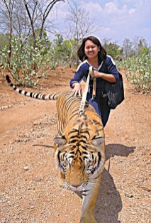 Tiger takes me for a walk in Thailand