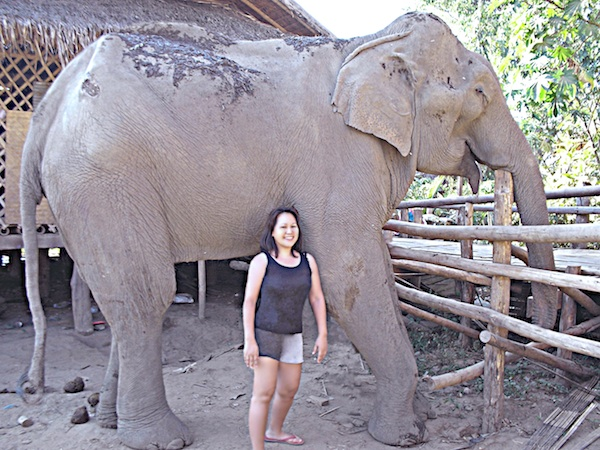Volunteering in Elephant Sanctuary in Chiangmai Thailand