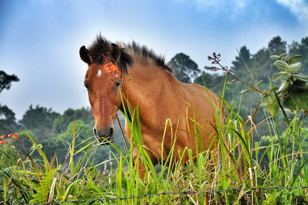 A Beautiful Horse in Kapatagan Valley