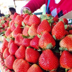 Fresh Strawberries in La Trinidad