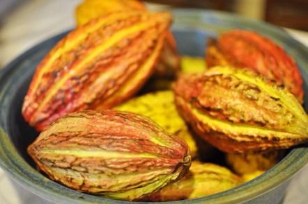 Philippine Cacao Fruit