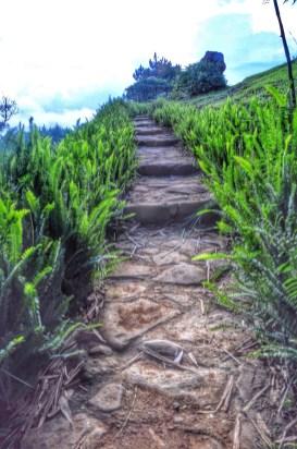 Pathway to Kublai Millan's Agong House