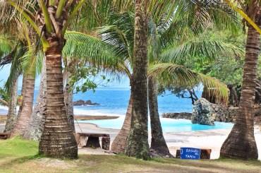 Growing Palm Trees at AMCO Diguisit Resort