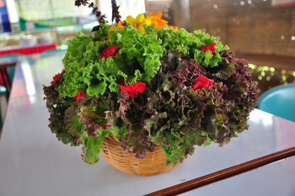 Beautifully arranged fresh organic vegetables