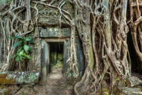 Ancient Stone Door and Tree Roots in Ta Prohm Temple Ruins
