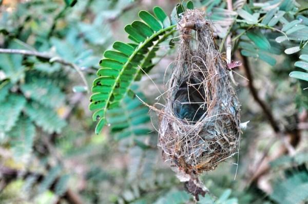 Birds Nest - the resort is home to various species of birds