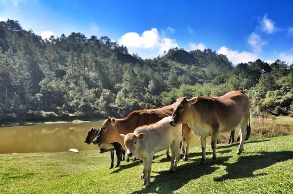 Visig Sagada Danum Lake