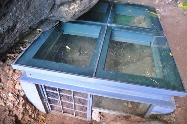 Human Bones inside glass enclosed excavation