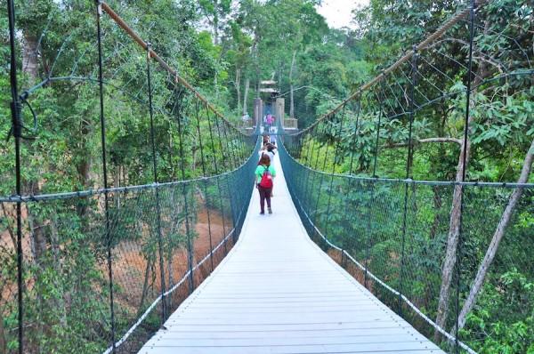 Jungle Walk at Kenyir Elephant Village