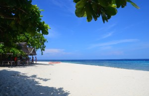 Under the Tree in Pamilacan Island