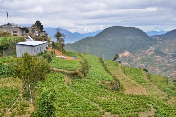 Vegetable Terraces in Buguias Benguet