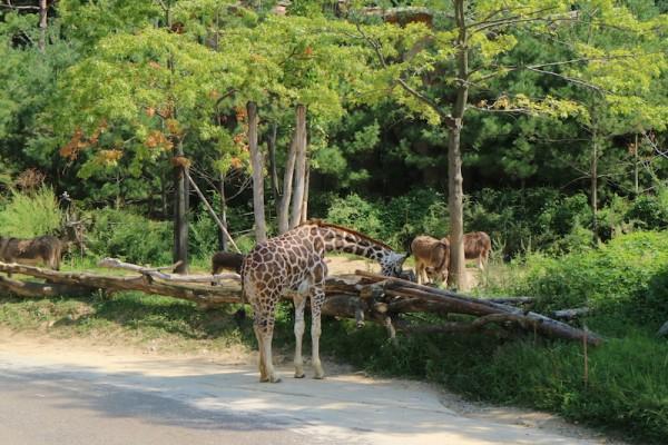 Animals inside Lost Valley