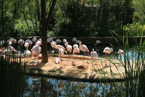 Flamingos inside Lost Valley