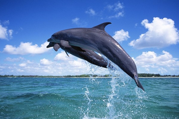 Dolphin Watching in Maldives photo by www.kaanibeach.com