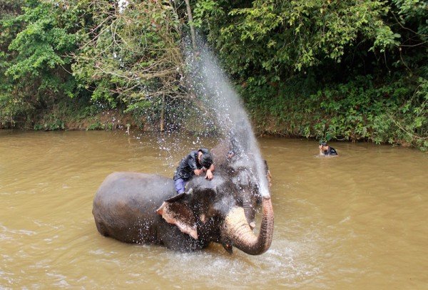 An elephant's trunk is very dexterous and can hold 8 litres of water!