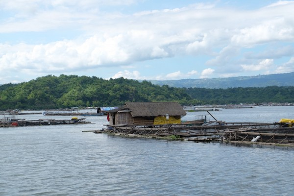 Fish Pens around Taal Lake