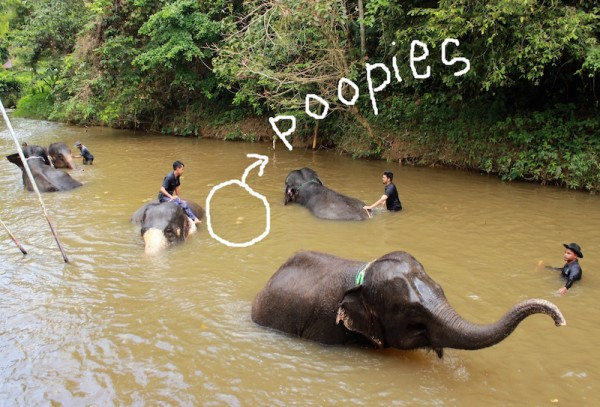 It is almost like a reflex, when you put an elephant in the water. They immediately make little poop floaties.